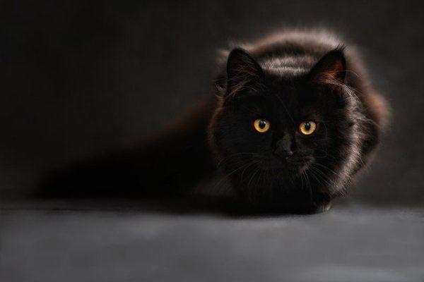 Kuscheldecke Katzenmotiv